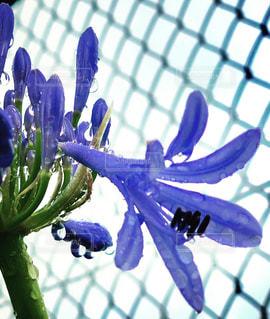 近くの花のアップの写真・画像素材[1257101]