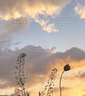 空には雲のグループの写真・画像素材[1271890]
