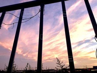 日没の前にツリーの写真・画像素材[1277032]