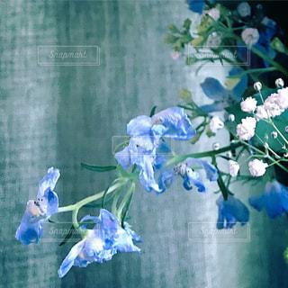 花の写真・画像素材[1347855]