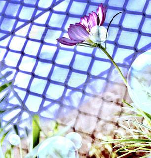 近くの花のアップの写真・画像素材[1359939]