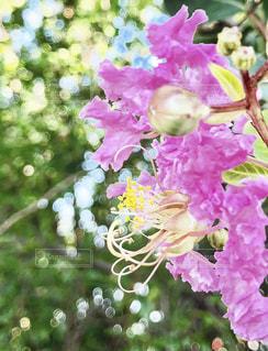 近くの花のアップの写真・画像素材[1368315]