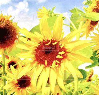 近くの花のアップの写真・画像素材[1369534]
