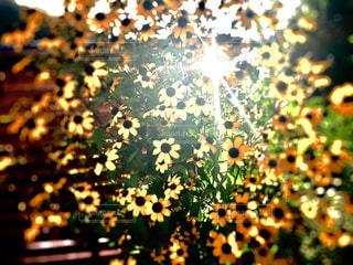 近くの植物のアップの写真・画像素材[1388446]