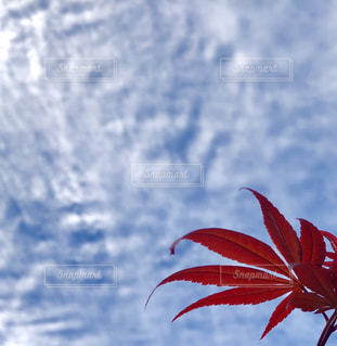 空を飛んでいる赤と白の凧の写真・画像素材[1510458]