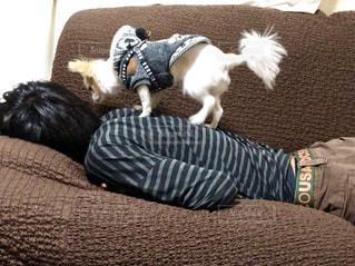 ベッドの上に横たわる犬の写真・画像素材[1625462]