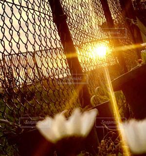 花の写真・画像素材[2645617]
