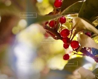 花をクローズアップするの写真・画像素材[2784039]