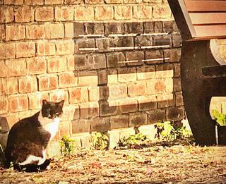 猫,動物,屋外,ペット,人物,石,ネコ