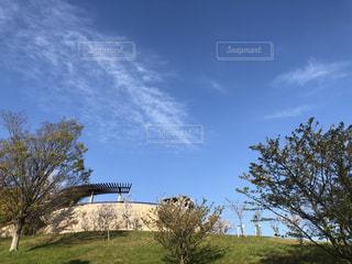 畑の大きな木の写真・画像素材[3240964]
