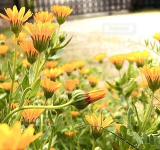 花園のクローズアップの写真・画像素材[4319728]