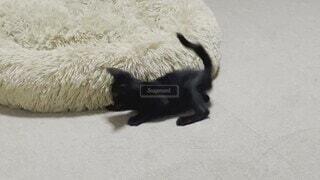 猫,動物,屋内,子猫,黒猫,クロネコ,猫の部屋