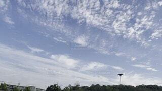 空,屋外,雲,樹木,日中
