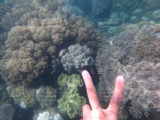海,オーストラリア,ピース,珊瑚,ジェスチャー