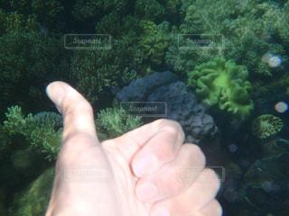 海,オーストラリア,珊瑚,眺め,グッド,ジェスチャー