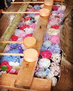 紫陽花,梅雨,手水舎