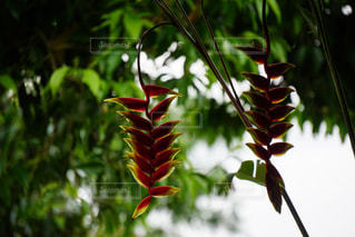 南国の花の写真・画像素材[1409645]