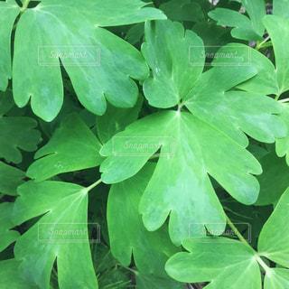 近くの緑の植物の写真・画像素材[1409646]