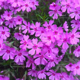 近くに紫の花のアップの写真・画像素材[1409650]