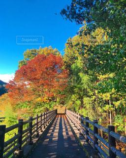 空,紅葉,湖,散歩,樹木,群馬,日中