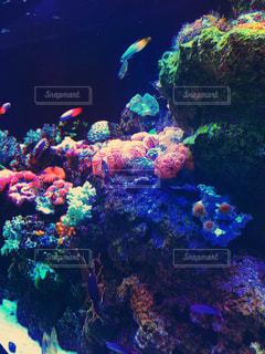 サンゴの水中ビューの写真・画像素材[786832]