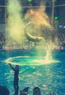 イルカの写真・画像素材[789057]