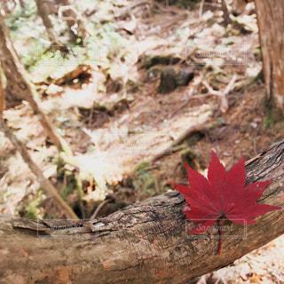 真っ赤な秋♡の写真・画像素材[880573]