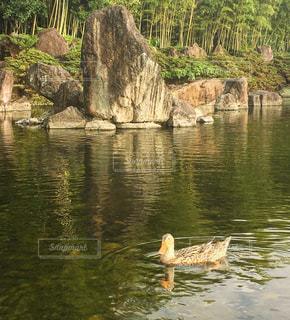 近くに水の体の横にある岩のアップの写真・画像素材[751919]