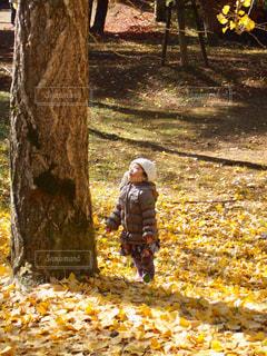 銀杏の木を見上げての写真・画像素材[851563]