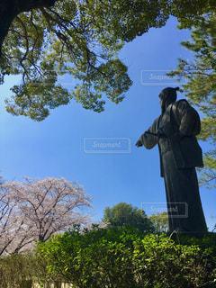 青空と桜との写真・画像素材[1095076]