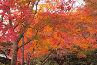 フォレスト内のツリーの写真・画像素材[885701]