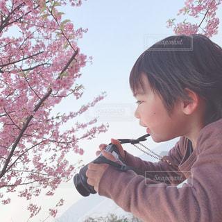 桜を見つめるカメラ男子の写真・画像素材[1828813]
