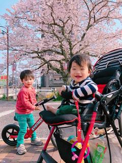 自然,春,桜,屋外,綺麗,散歩,花見,子供,満開,お花見,人物,人,少年,近所,3歳,男児,11ヵ月