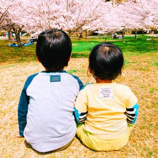 桜と小さな2人の背中の写真・画像素材[1832398]