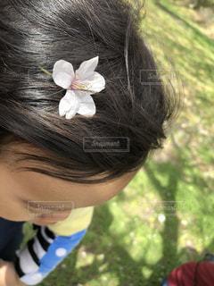 自然,春,桜,屋外,綺麗,散歩,花見,子供,満開,お花見,人物,人,頭,近所,桜の花,11ヵ月