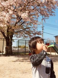 自然,風景,公園,春,桜,屋外,散歩,花見,男,撮影,子供,満開,シャボン玉,樹木,お花見,人物,外,人,幼児,少年,男の子,若い,近所,桜の花,3歳,男児,しゃぼん玉