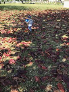 公園,散歩,落ち葉,遊び,休日
