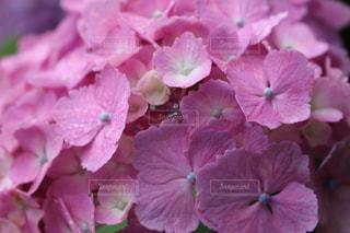 近くの花のアップ - No.813340