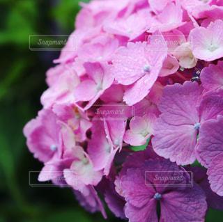 近くの花のアップ - No.813345