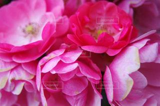 近くの花のアップ - No.842891