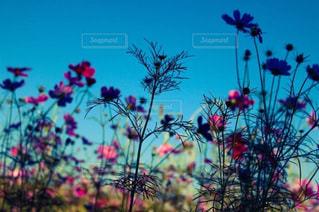 近くの植物のアップの写真・画像素材[851002]
