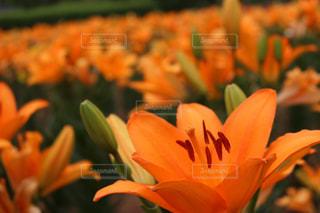 近くの花のアップの写真・画像素材[851023]
