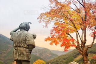 五木村の写真・画像素材[870383]