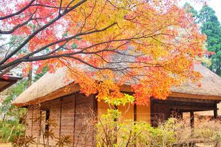 建物の横にあるツリーの写真・画像素材[870384]