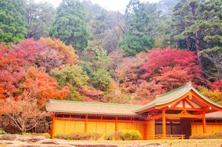 秋,紅葉,カラフル,観光,熊本,歴史,平家,五家荘