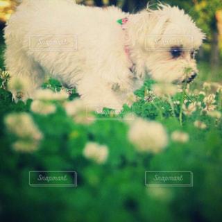 近くに犬のアップの写真・画像素材[974151]