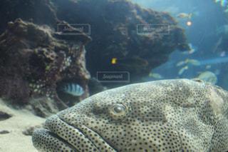 近くに魚のアップ - No.1045658