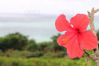 赤い花の写真・画像素材[1045667]