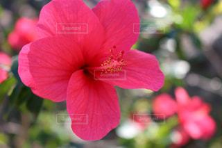 近くの花のアップ - No.1124736