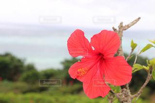 緑の葉と赤い花 - No.1124739